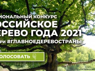 Национальный конкурс «Российское дерево года 2021»